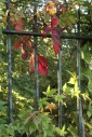 13th September 2011 - Leaves and Railings